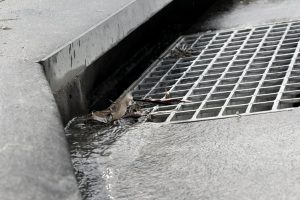 Million dollar storm drain cleaning project nears end
