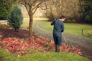 Read more about the article Practice proper lawn care to reduce drainage clogs