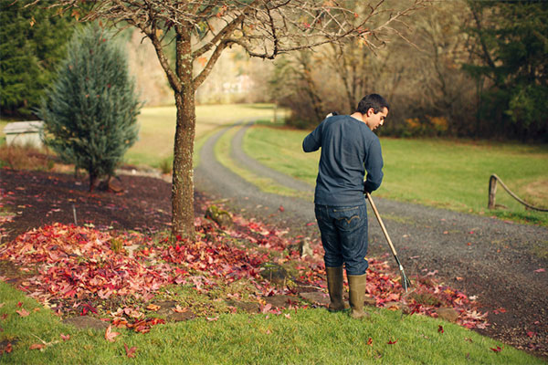 Practice proper lawn care to reduce drainage clogs
