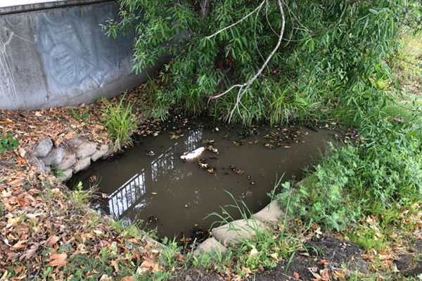 Sewer line blockage causes sewage to rise up through area manholes